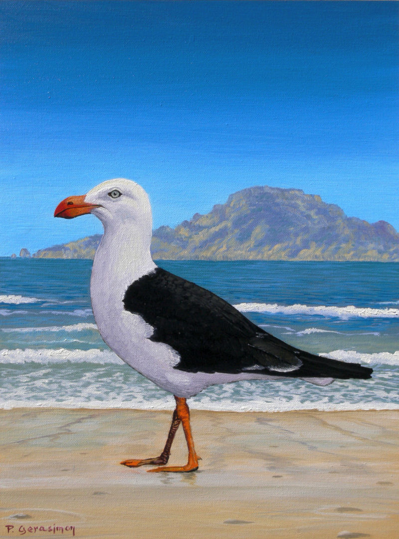 Pacific Gull Painting